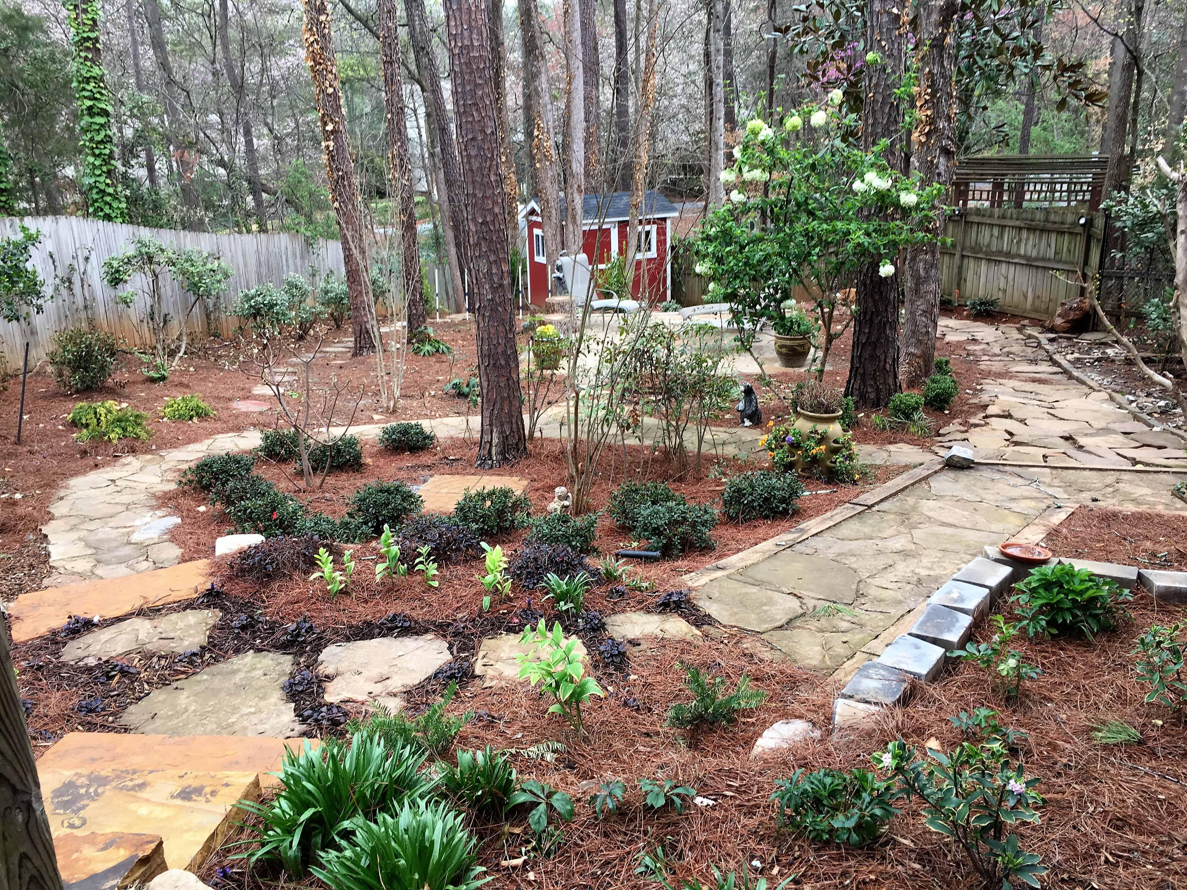 backyard 03-2017 (1)